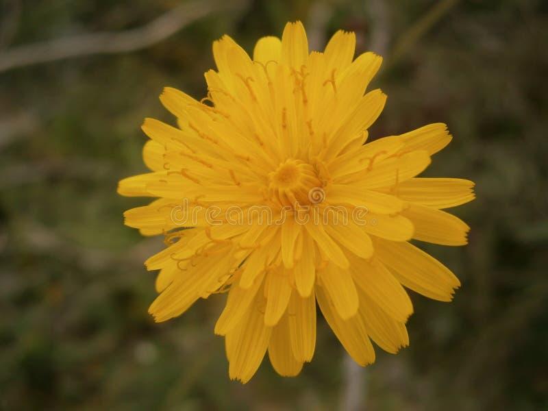 Uma flor bonita imagem de stock