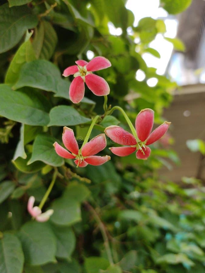 Uma flor bonita em meu jardim imagem de stock