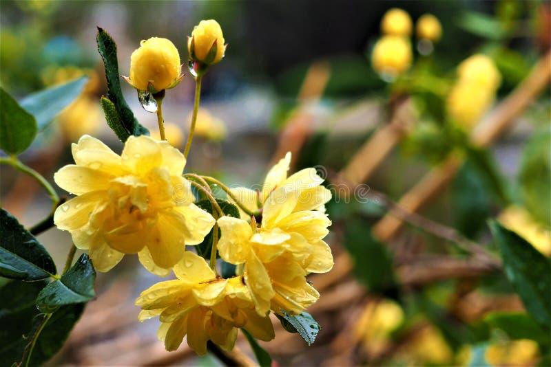 Uma flor bonita em um jardim foto de stock