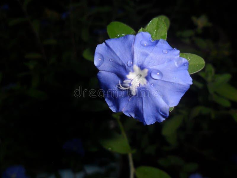 Uma flor bonita no jardim fotos de stock royalty free