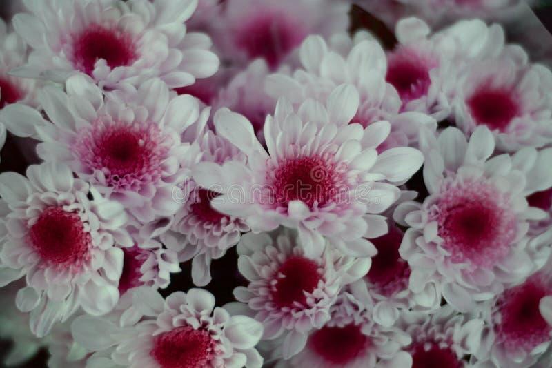 uma flor branca com um cora??o roxo fotos de stock royalty free