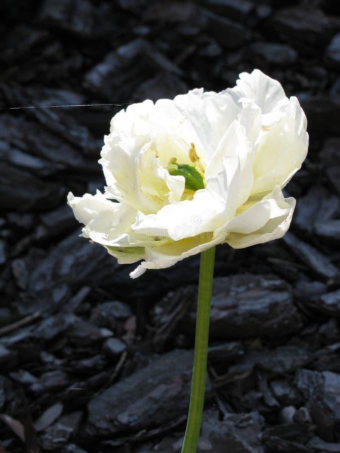 Uma flor branca não identificada bonita em um fundo de madeira da casca imagens de stock