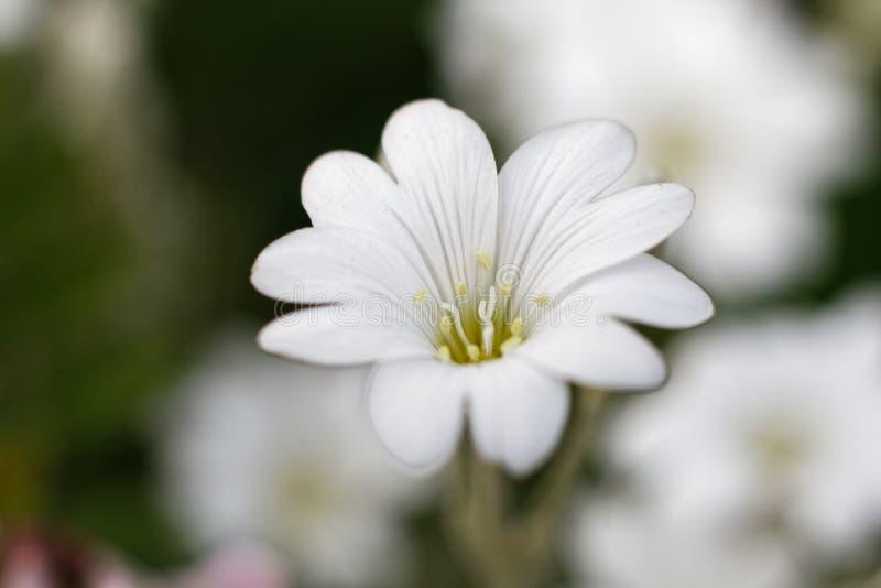Uma flor consideravelmente branca no quadro completo fotografia de stock royalty free