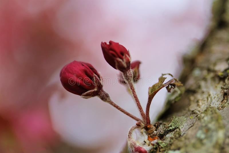 Uma flor da primavera - um começo novo fotos de stock royalty free