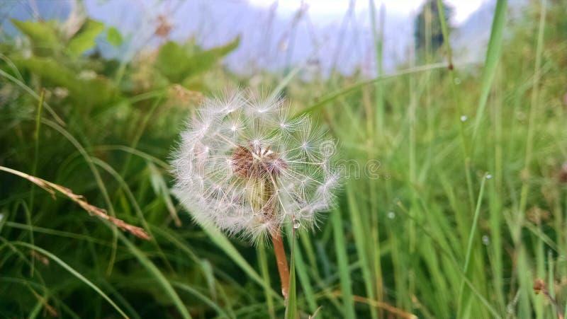 Uma flor da vista imagem de stock