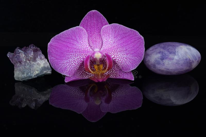 Uma flor de uma orquídea cor-de-rosa entre pedras diferentes da ametista em um fundo preto imagem de stock royalty free