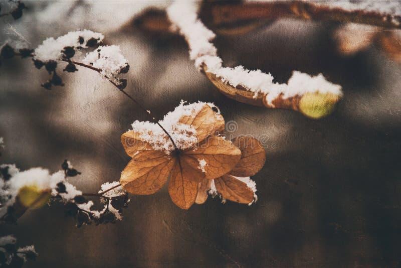 Uma flor delicada murcho no jardim em um dia gelado frio durante a neve branca de queda imagens de stock royalty free
