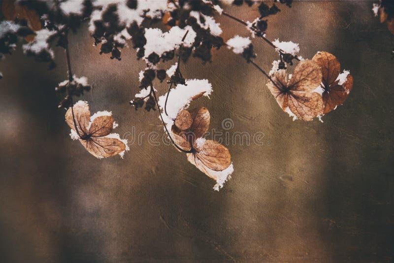 Uma flor delicada murcho no jardim em um dia gelado frio durante a neve branca de queda fotos de stock
