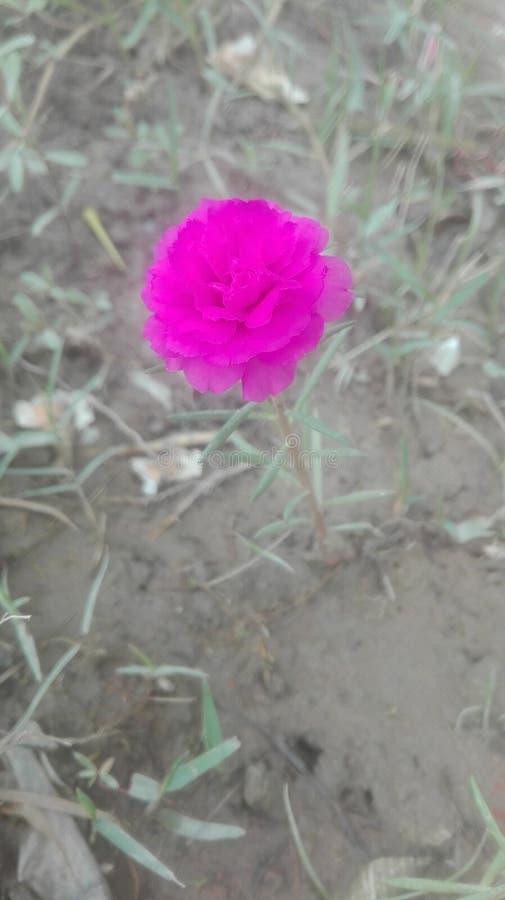 uma flor do tempo fotos de stock royalty free