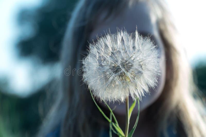 Uma flor nas mãos de uma criança imagem de stock royalty free