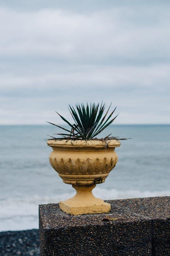Uma flor pelo mar foto de stock