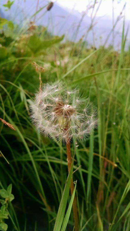 Uma flor selvagem foto de stock