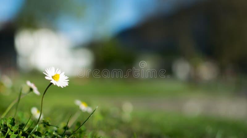 Uma flor simples imagens de stock