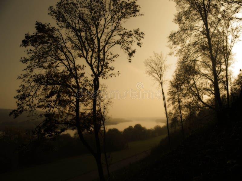 Uma floresta dourada com névoa e luz morna foto de stock royalty free