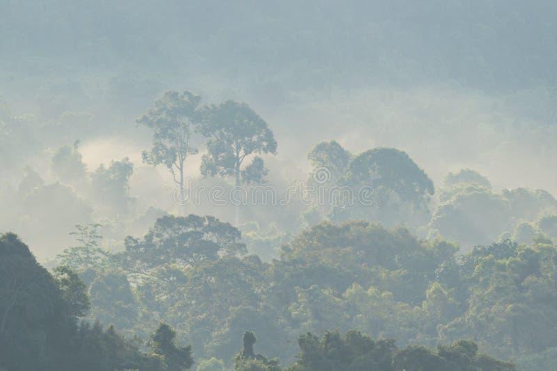 Uma floresta enevoada no amanhecer fotografia de stock