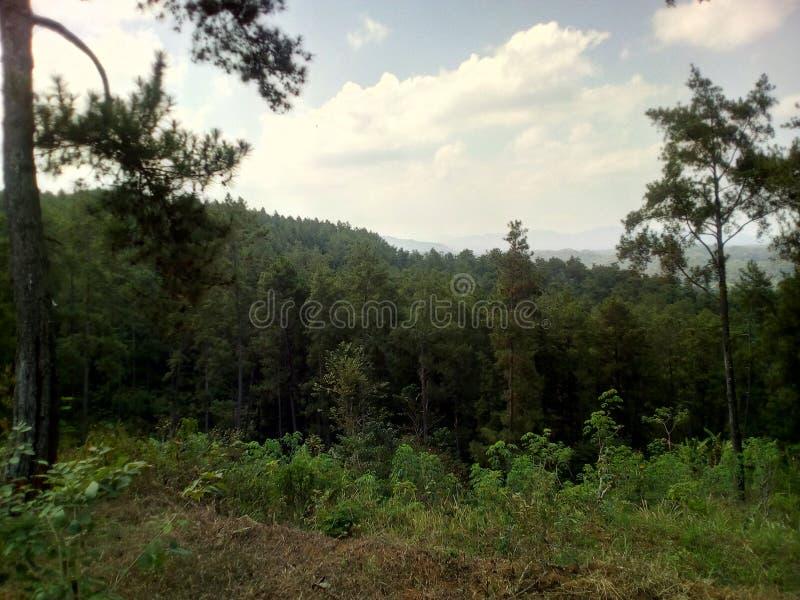 Uma floresta pequena do paraíso no mundo foto de stock