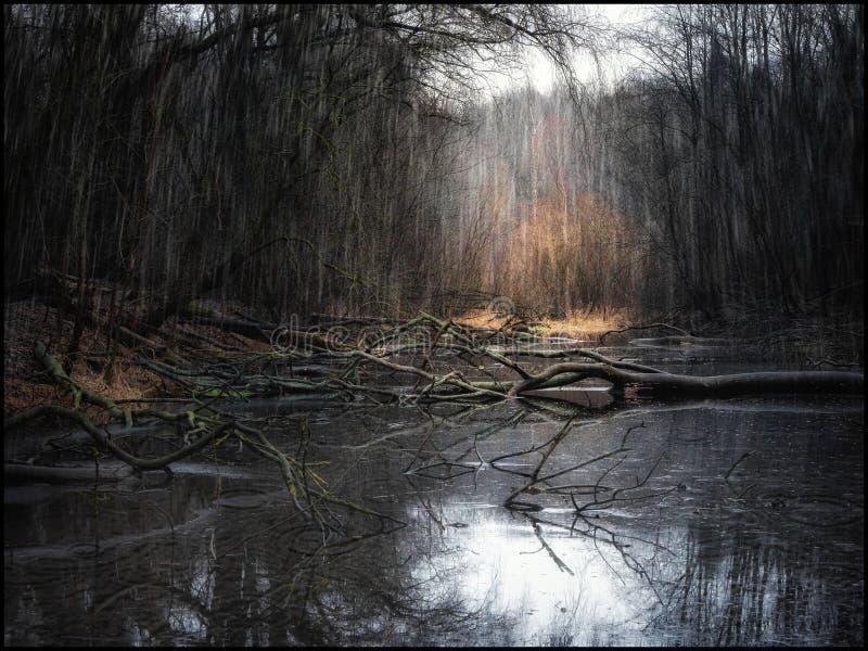 Uma floresta profunda e chuvosa com árvores caídas e um lago fotos de stock