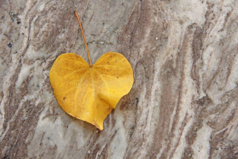 Uma folha amarela de uma árvore na forma de um coração encontra-se no mármore Projeto romântico do outono imagem de stock royalty free