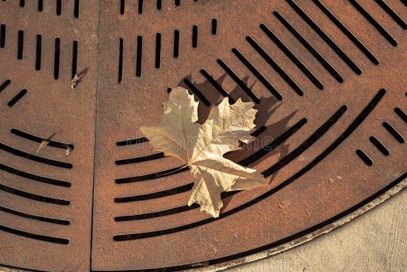 Uma folha amarela do outono caída no fundo oxidado do teste padrão do sumário da grelha da rua do metal imagem de stock royalty free