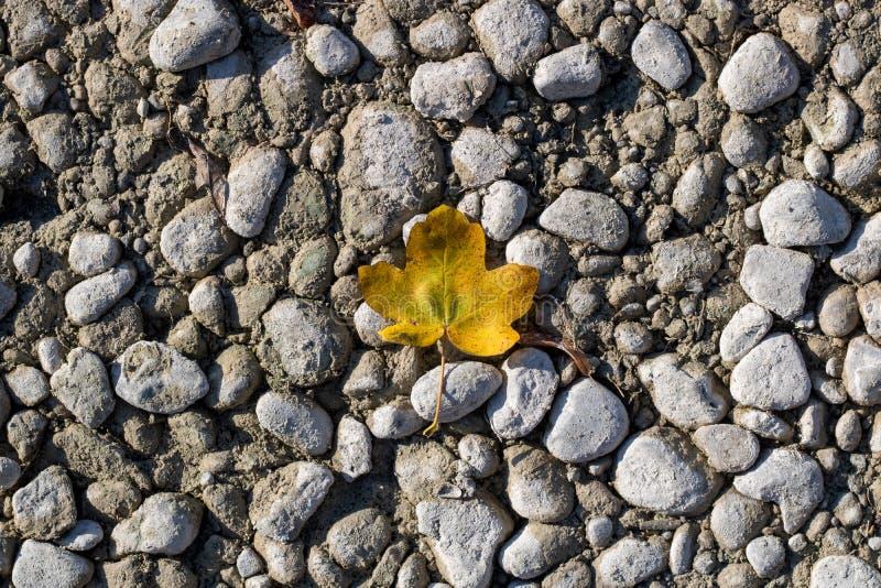 Uma folha amarela no autum em uma terra de pedra foto de stock