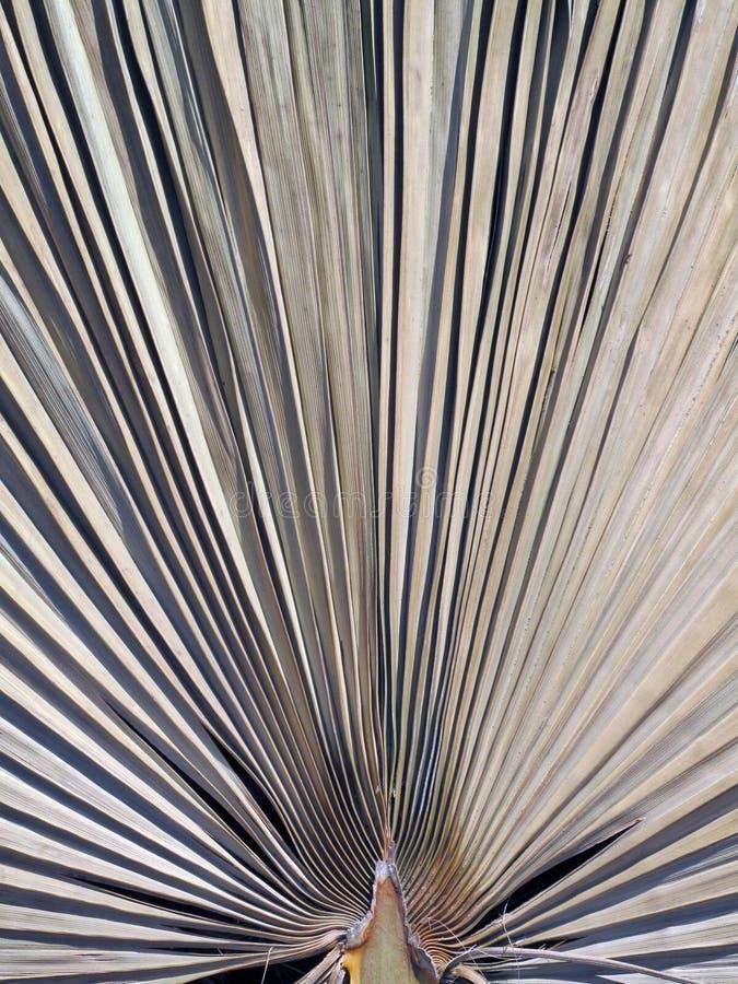 Uma folha de palmeira secada fotos de stock