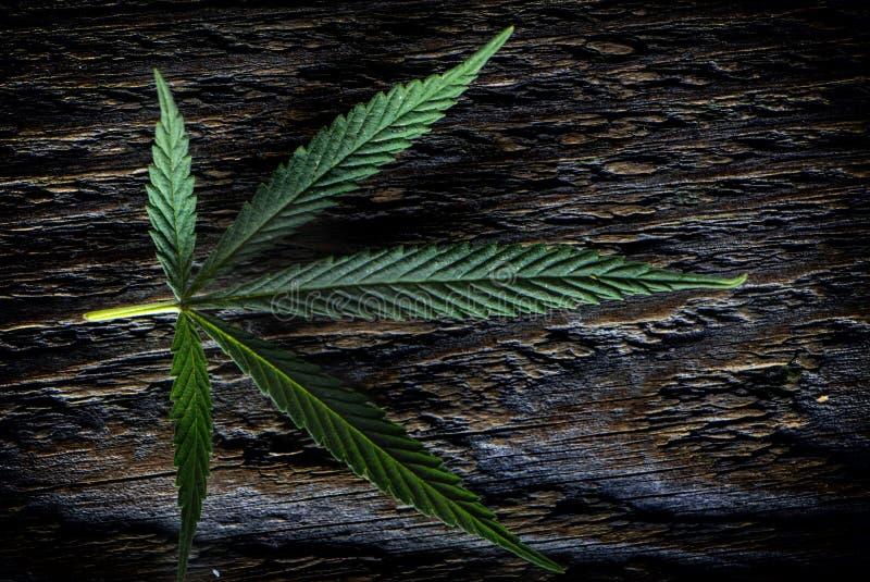 Uma folha do cânhamo em um fundo de madeira branco foto de stock royalty free