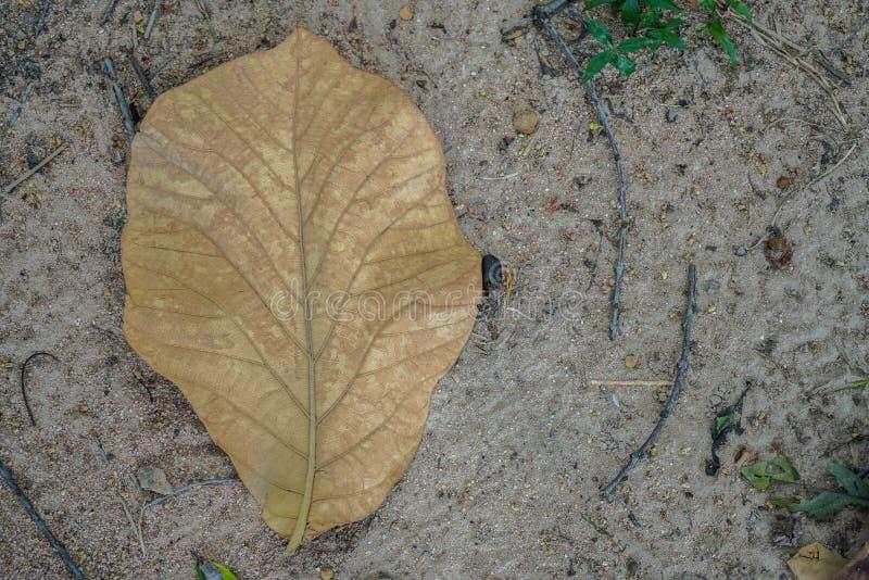 Uma folha marrom nas folhas inoperantes cobriu a terra da floresta no autum imagem de stock