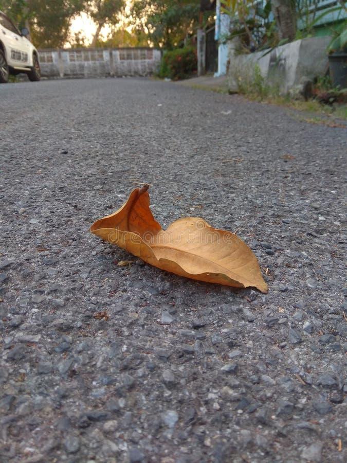 Uma folha seca caída no assoalho da estrada concreta foto de stock
