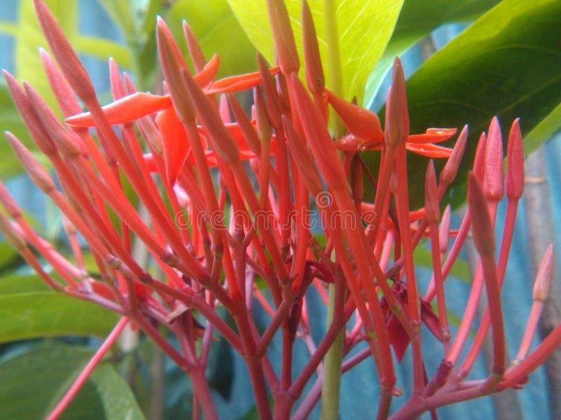 Uma foto agradável da flor imagens de stock
