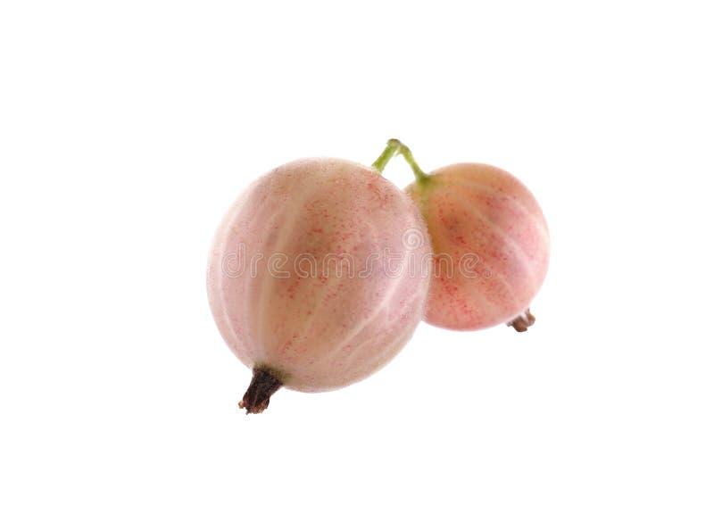 Uma foto macro bonita de groselhas cor-de-rosa e saborosos da luz -, isolada em um fundo branco Bagas doces do verão imagens de stock