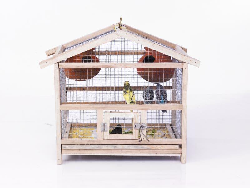 Uma gaiola com pássaros fotografia de stock royalty free