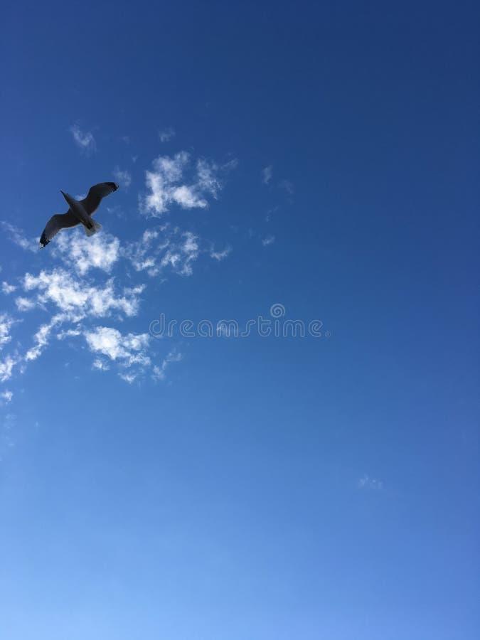 Uma gaivota de mar está voando no céu fotografia de stock royalty free