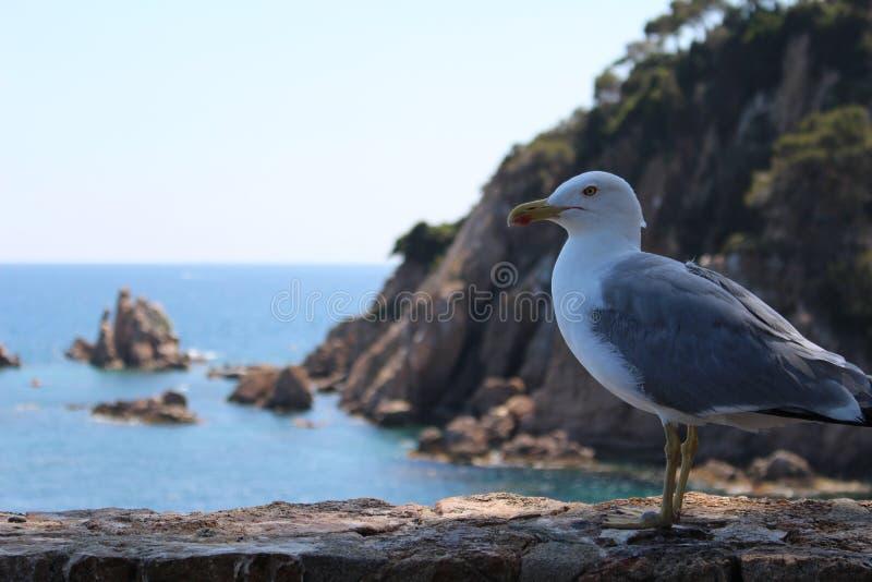Uma gaivota em Blanes Catalonia foto de stock