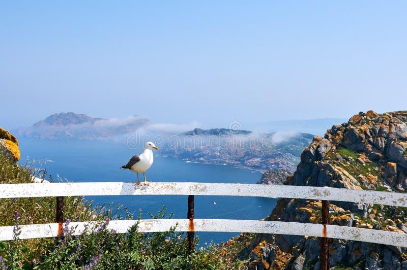 Uma gaivota em uma cerca na ilha de Cies em um dia nevoento foto de stock