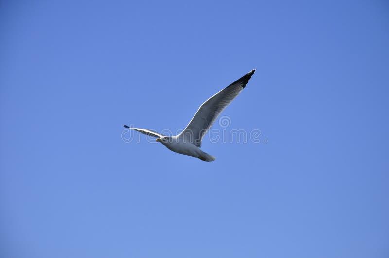 Uma gaivota em Marselha, france imagem de stock