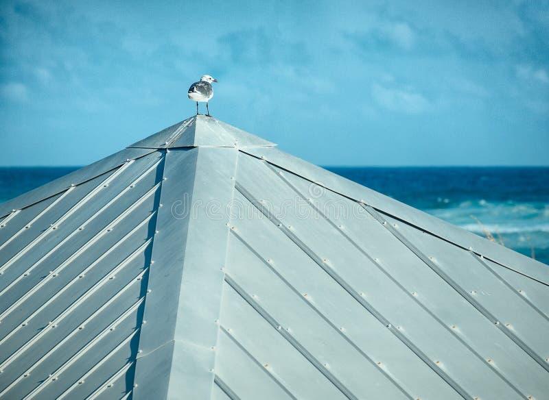 Uma gaivota em Tin Roof Looking Out ao mar imagens de stock royalty free