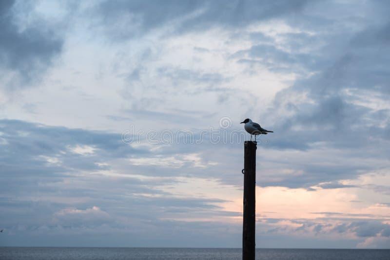 Uma gaivota está esperando-à ser alimentada foto de stock