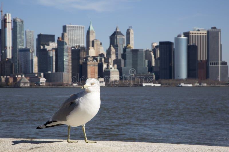 Uma gaivota na frente da skyline de Manhattan fotografia de stock royalty free