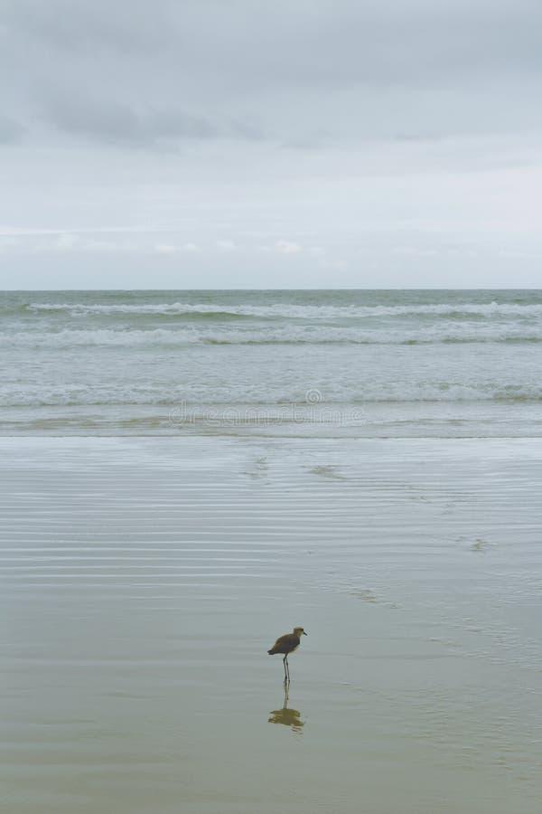 Uma gaivota que compõe a imagem imagens de stock