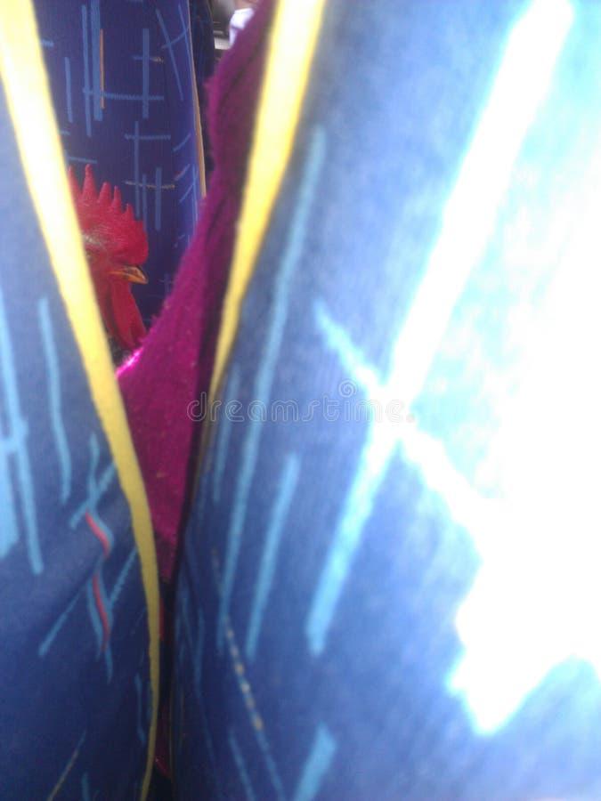 Uma galinha do ônibus imagem de stock