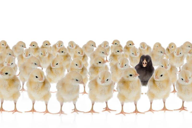 Uma galinha original fotografia de stock