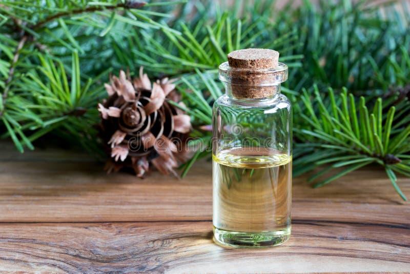 Uma garrafa do óleo essencial de abeto de Douglas com o sutiã fresco do abeto de Douglas foto de stock