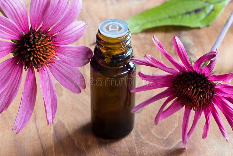Uma garrafa do óleo essencial do echinacea com echinacea fresco floresce imagens de stock royalty free