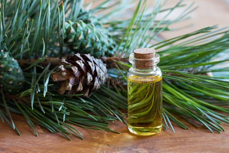Uma garrafa do óleo essencial do pinho com os galhos frescos do pinho fotografia de stock royalty free