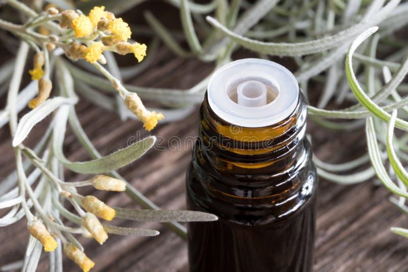 Uma garrafa escura do óleo essencial do helichrysum com helichr de florescência fotos de stock royalty free