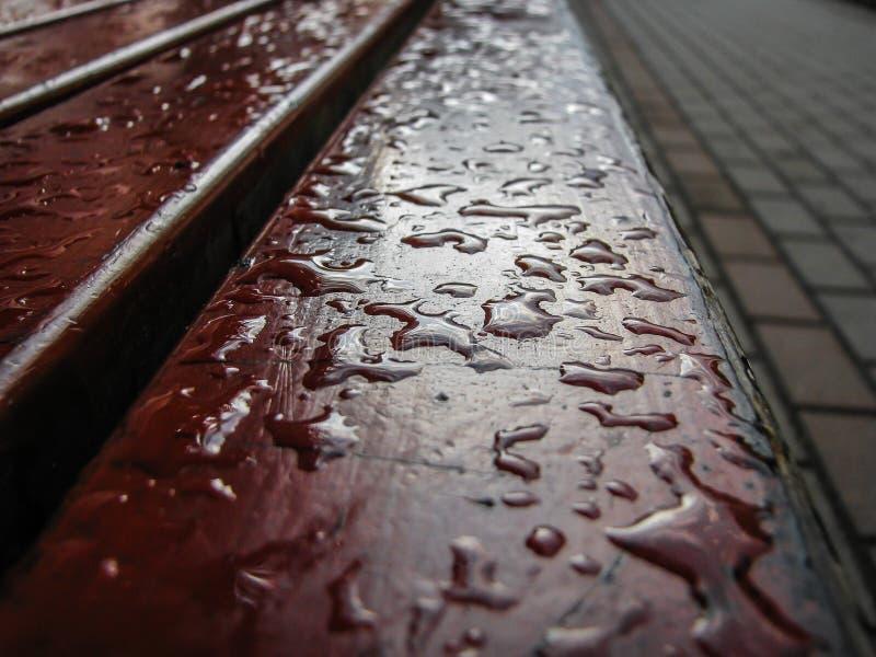 Uma gota da água em uma árvore, uma rua após uma chuva fotografia de stock