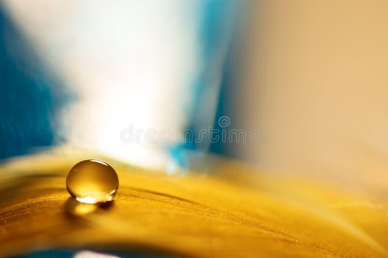 Uma gota da água em uma pena dourada com um fundo azul Uma pena com uma gota da água Foco seletivo imagem de stock royalty free