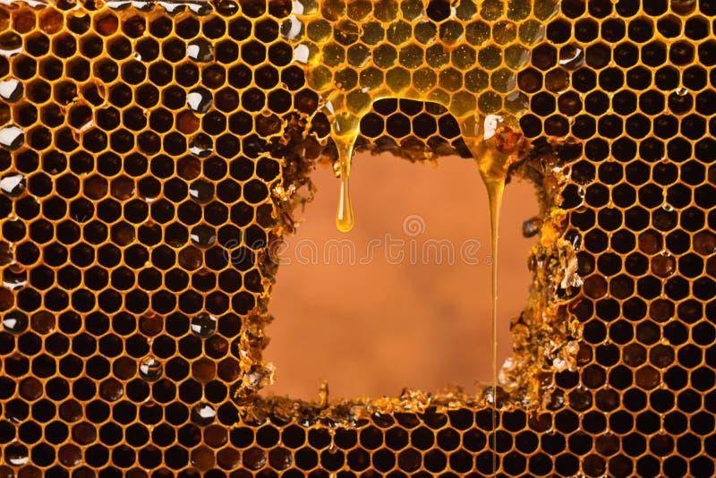 Uma gota de fluxos claros frescos do mel sobre o favo de mel Mel da abelha em um quadro da cor escura Minimalismo no alimento fotografia de stock