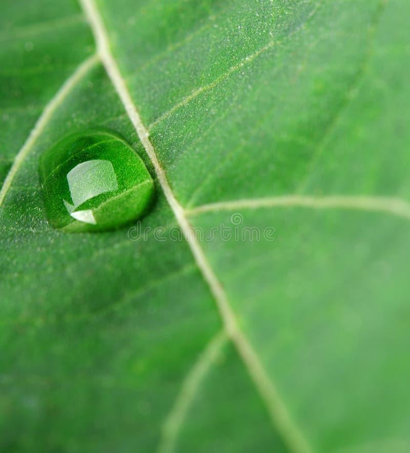 Download Uma Gota Do Orvalho Em Uma Folha Imagem de Stock - Imagem de ambiente, planta: 26502865