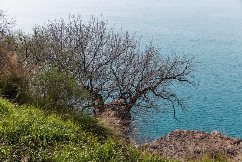 Uma grama verde e uma ?rvore livre das folhas gr?ficas contra um fundo azul do mar fotos de stock royalty free